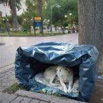Los perros callejeros de Luján tienen su propio refugio
